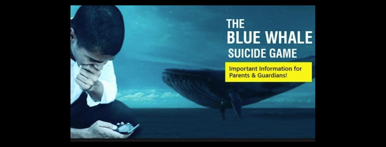 Essay/Term paper: Blue whales