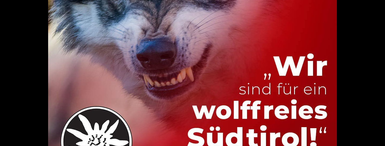 Wolf SVP