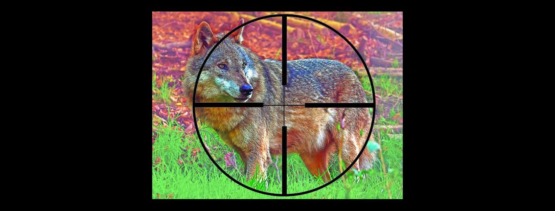 abschuss_wolf.jpg