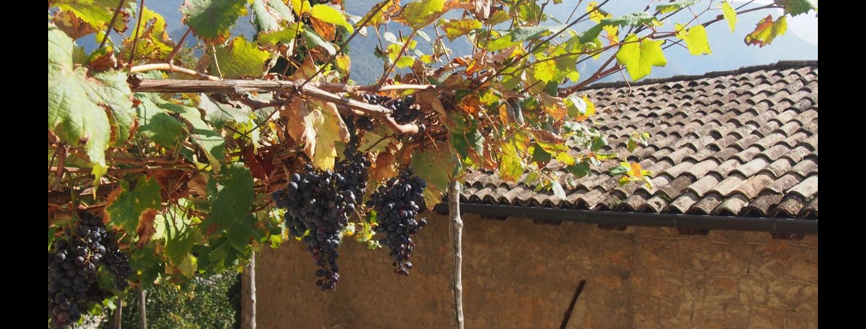 Aufstieg unter Weinreben