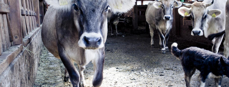 Den Stier bei den Hörnern packen | Salto.bz