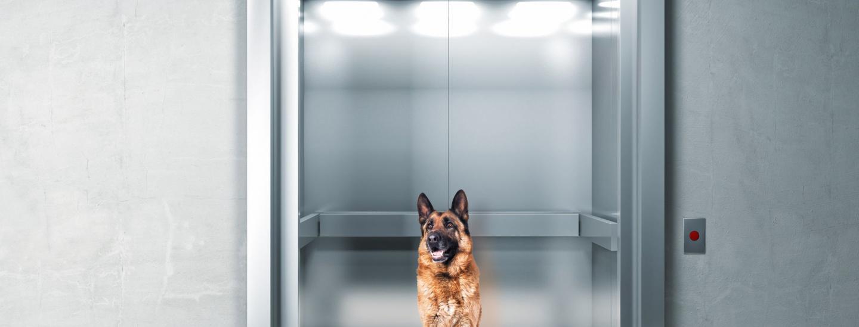 cane_ascensore_condominio-id25785.jpg