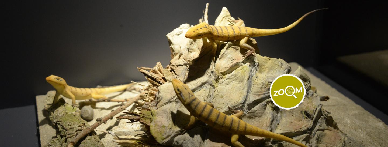 Lucertola - Museo Scenzia Naturale