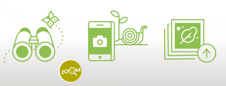Zoom4 - City Nature Challange