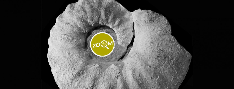 header-salto-zoom-7