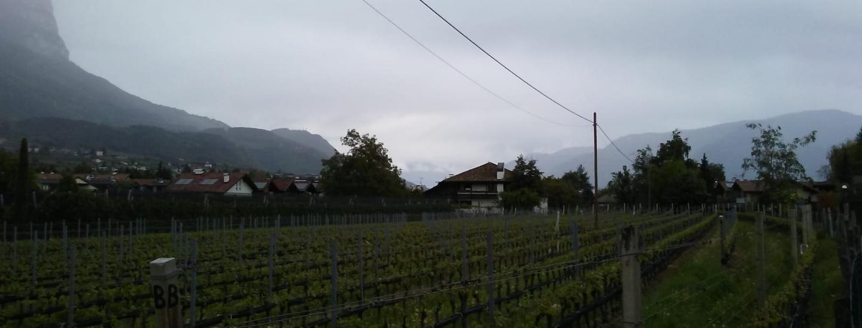 terreni coltivati ad Appiano - maggio 2019