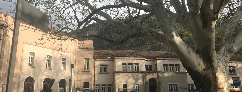 platano parco stazione albero bolzano