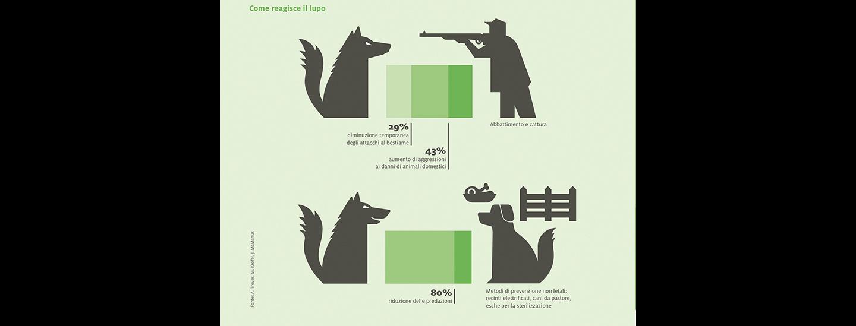 lupo_alto_adige_infografica.jpg
