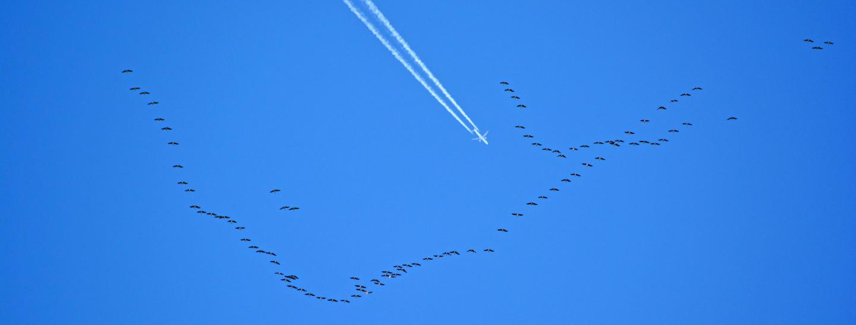 migratory-2464684.jpg