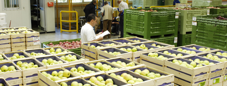 Obstgenossenschaft