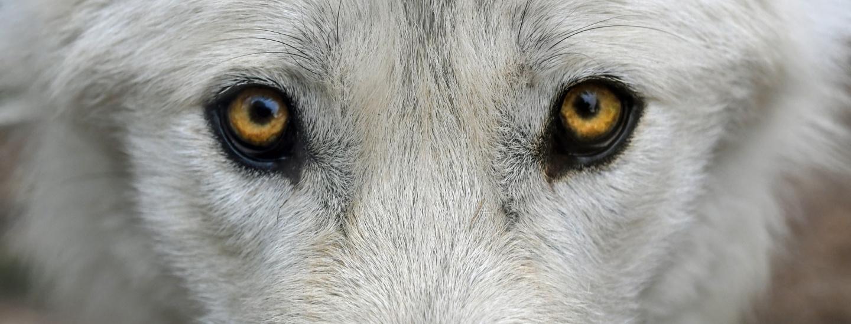 wolf-2782584_1920.jpg
