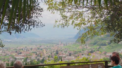 Schönste Aussicht unter Palmen und Olivenbäumen