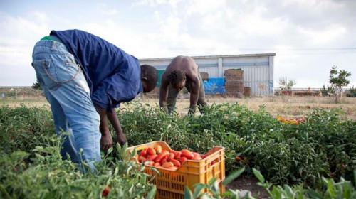Projekt Farm