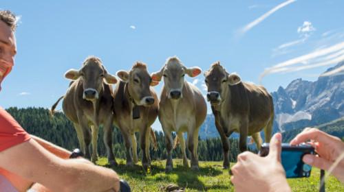 Idm, turismo, Südtirol