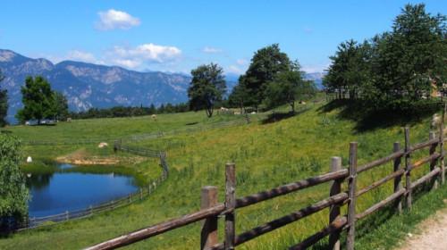 Die Alm mit ihren Weiden liegt aussichtsreich neben einem Teich am Waldrand