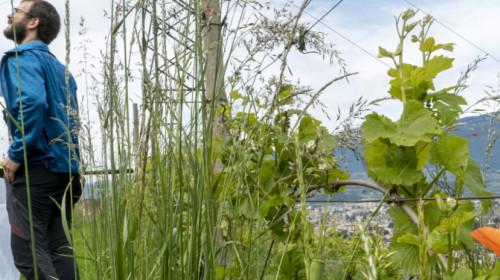 Biodiversitäts-Monitoring