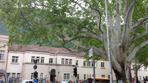 platano stazione parco bolzano