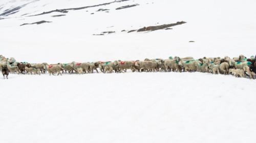 Transhumanz: Überquerung Gletscher