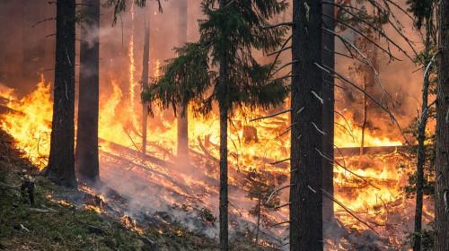 incendio_nel_bosco.jpg