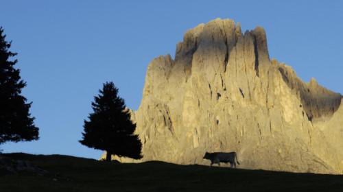 Monte Pana – Langkofel