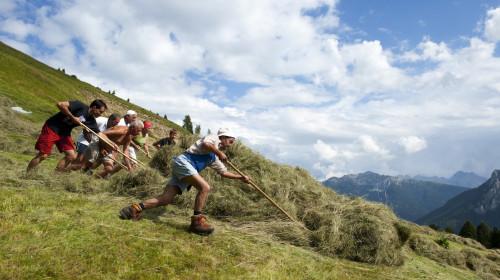 Soziale Landwirtschaft