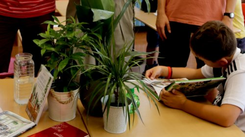 Pflanzen in der Schule