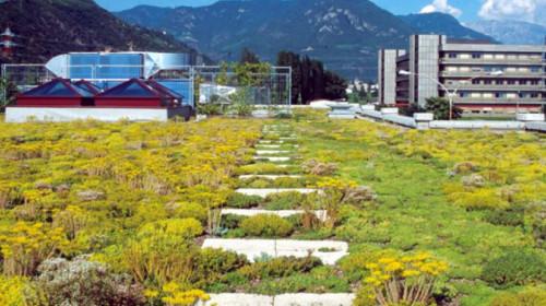 tetto verde Bolzano