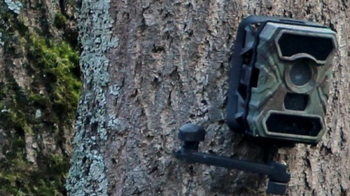 wildkamera.jpg