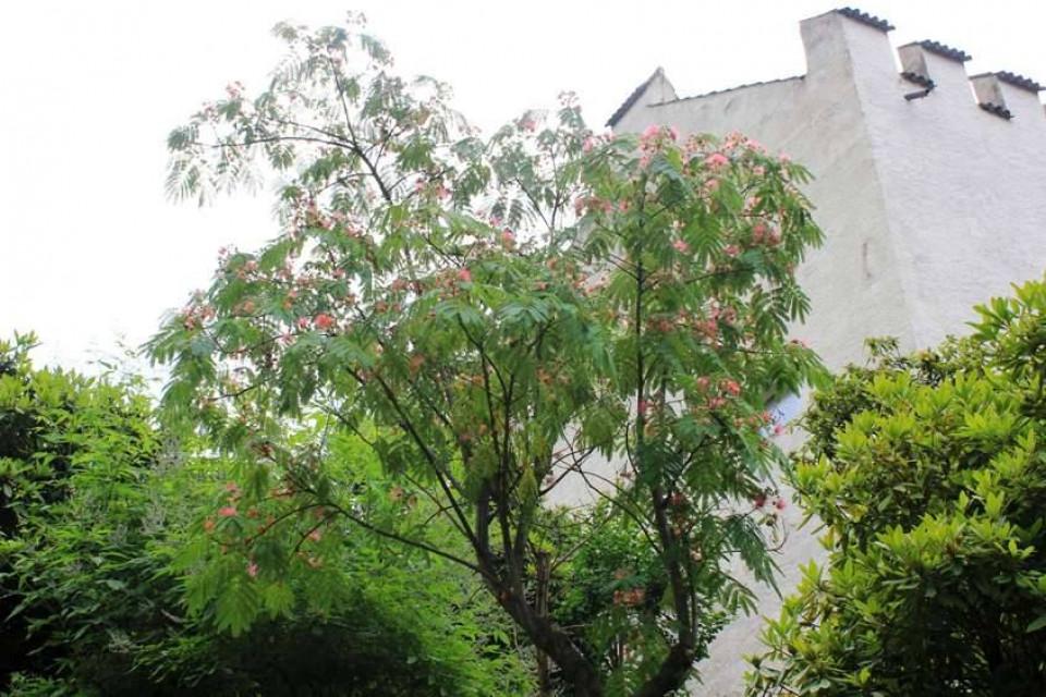 Der Chancengleichheitsbaum in Schloss Trauttmannsdorff