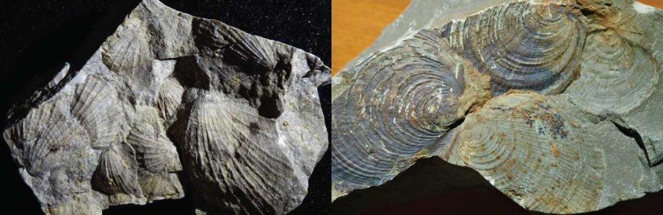 Naturmusem - Fossilien
