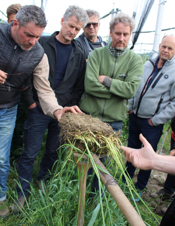 Bodenfruchtbarkeit ist das Um und Auf in der gesunden Landwirtschaft