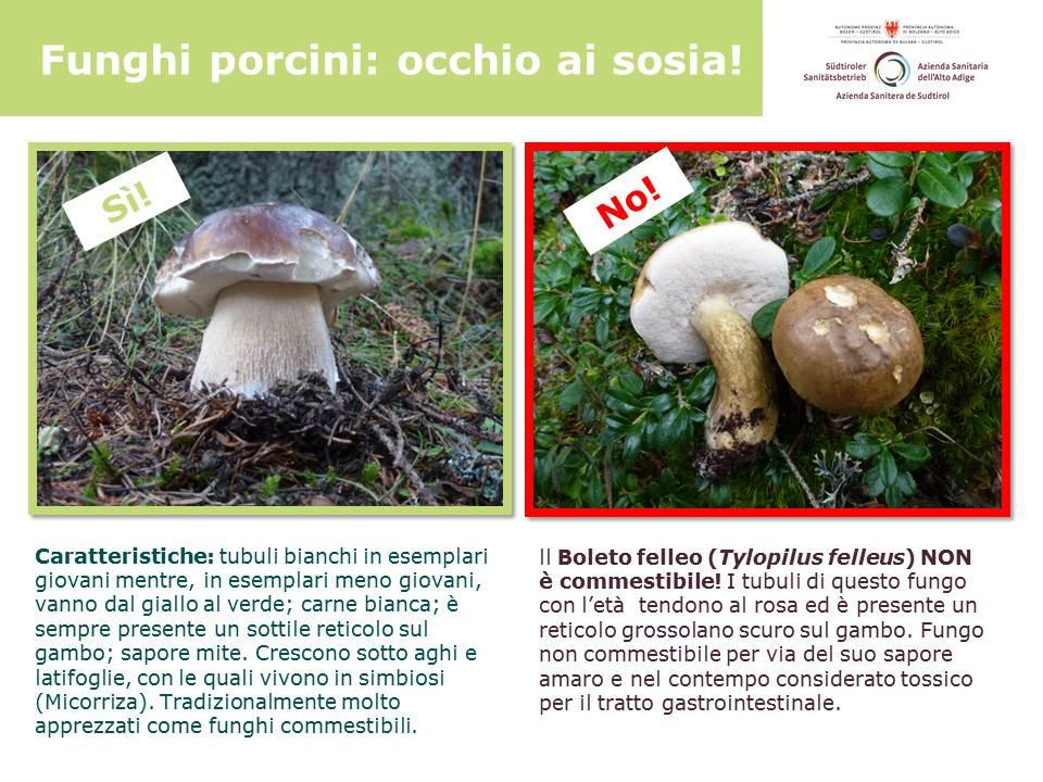 i_sosia._porcini_e_il_boleto_felleo_tylopilus_felleus.jpg