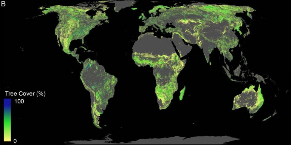 Potential für Bäume
