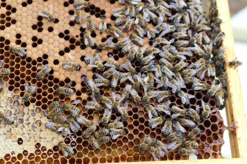 Eindrücke aus dem Bienenstock