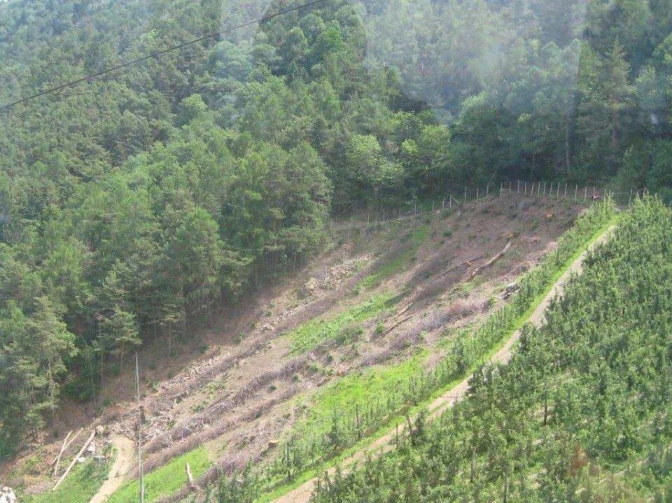 Waldrodung im Vinschgau 2015