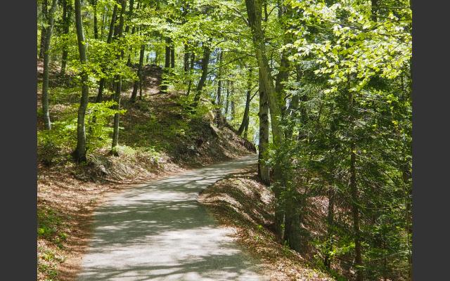 Schöne, einfache Waldwege
