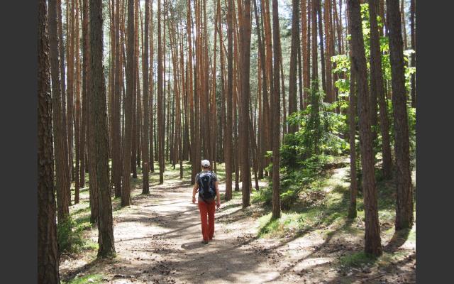 Waldweg beim Sportplatz