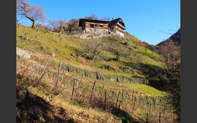 Der Steinmannhof auf steilem Wiesenhang