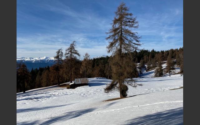 Die Lärchenwiesen am Salten