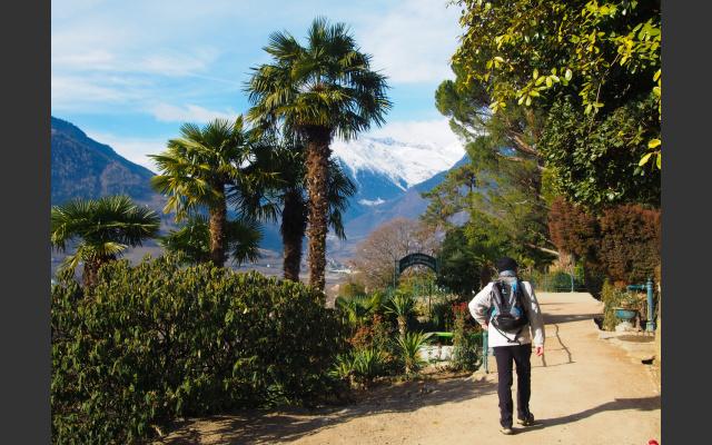 Bald zweigt der Tirolersteig rechts bergauf nach Dorf Tirol ab