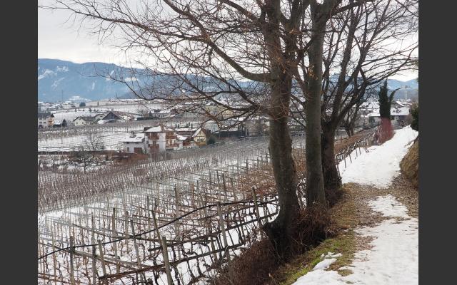 Winterliche Rebenlandschaft