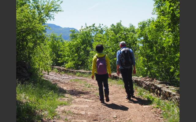 Aufstieg durch Buschwald