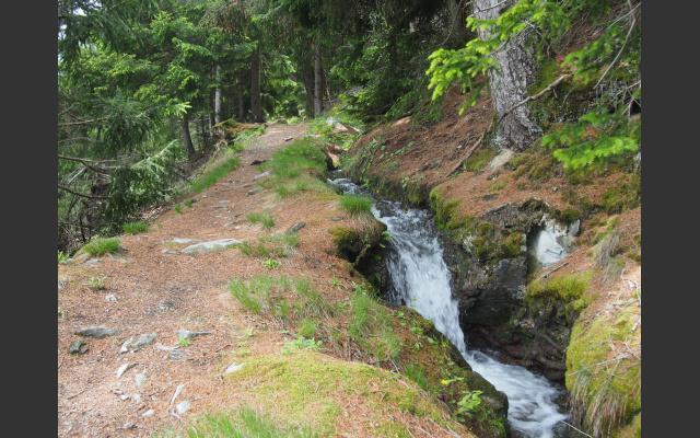 Der muntere Bergwaal begleitet den Waldsteig