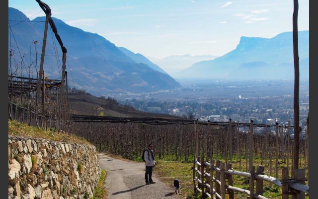 Auf dem Weinweg bergab ist das Etschtal im Blick