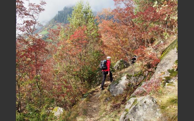07_steiler_aufstieg_durch_buschwald.jpg