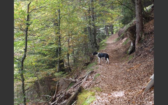 Waldsteig zum Rainguthof