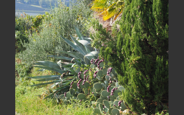 10_mediterrane_flora_am_weg.jpg
