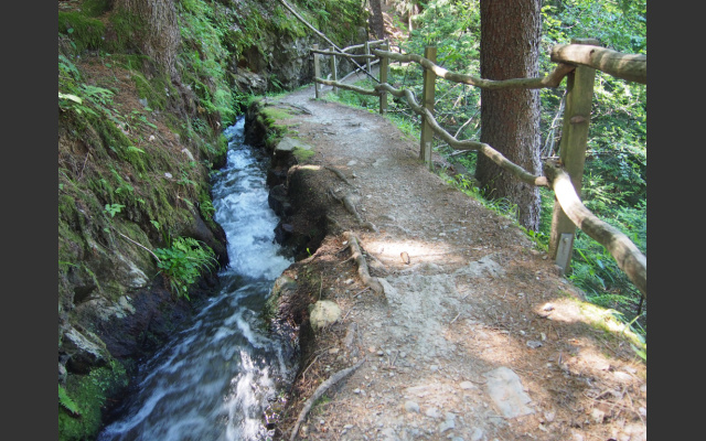 Der Waalweg im Wald