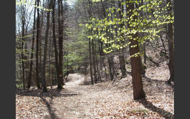 Frühlingshelle Buchenwälder