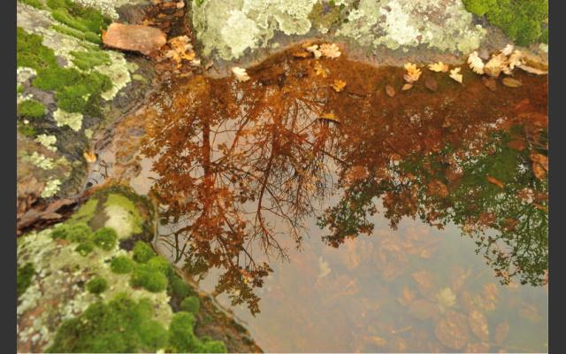 organisches Material im Wasser